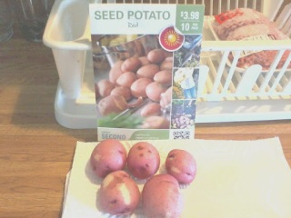 From Seed to Kitchen Red Potatoes